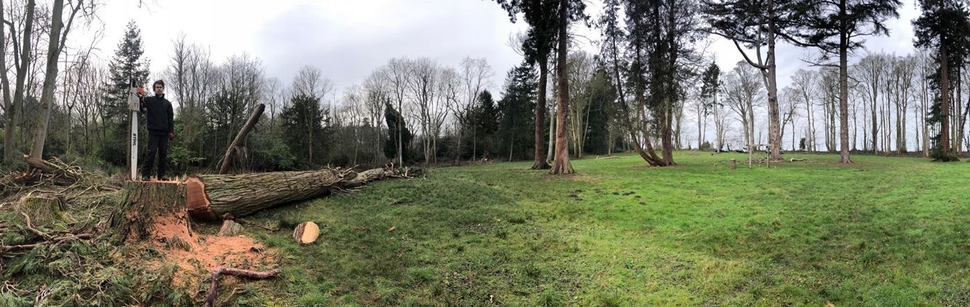 Tree felling Hintlesham