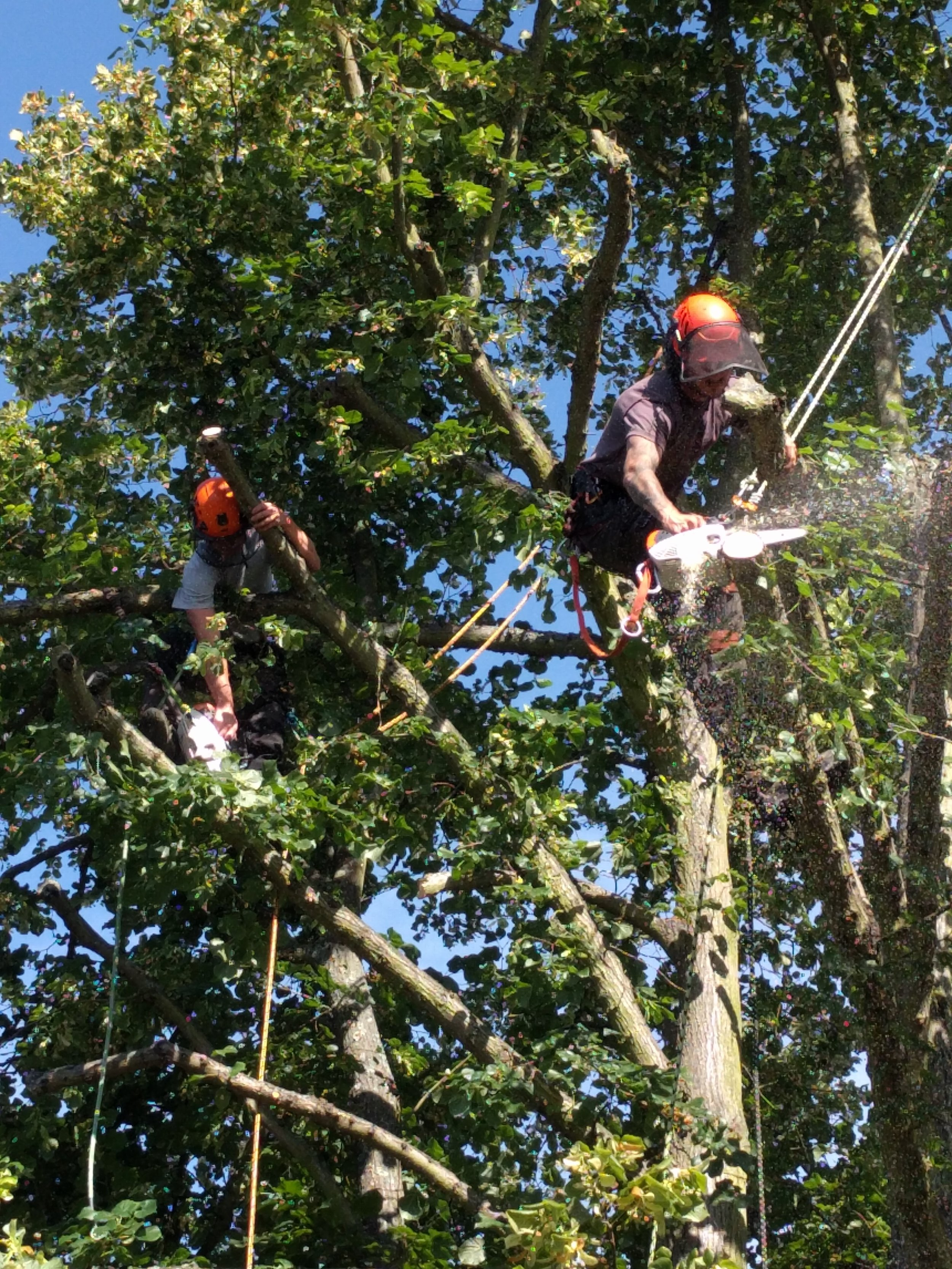 Gallery Dedham Vale Tree Surgery